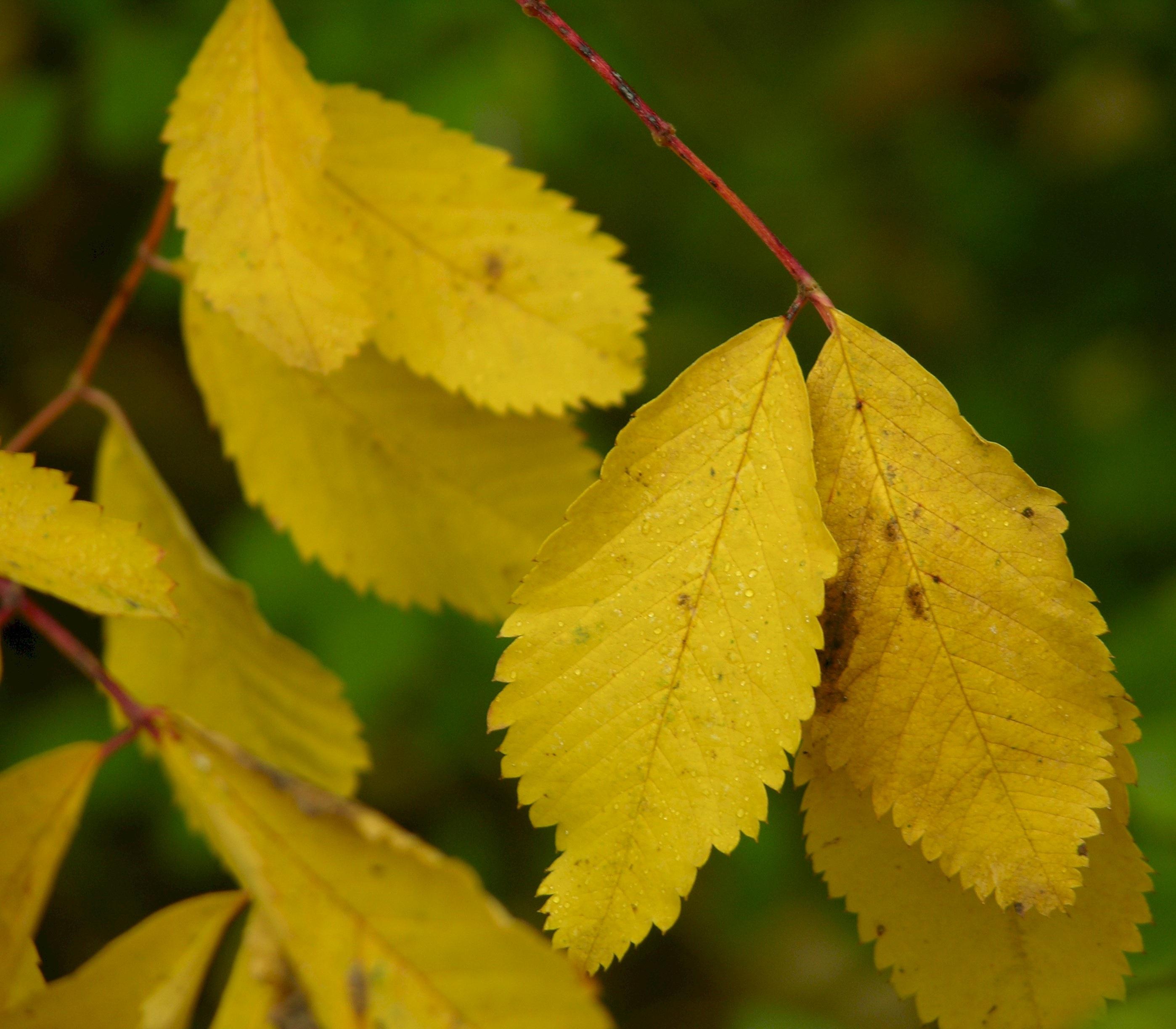 Planting Under Birch Trees : Planting flowers under birch trees the best ideas