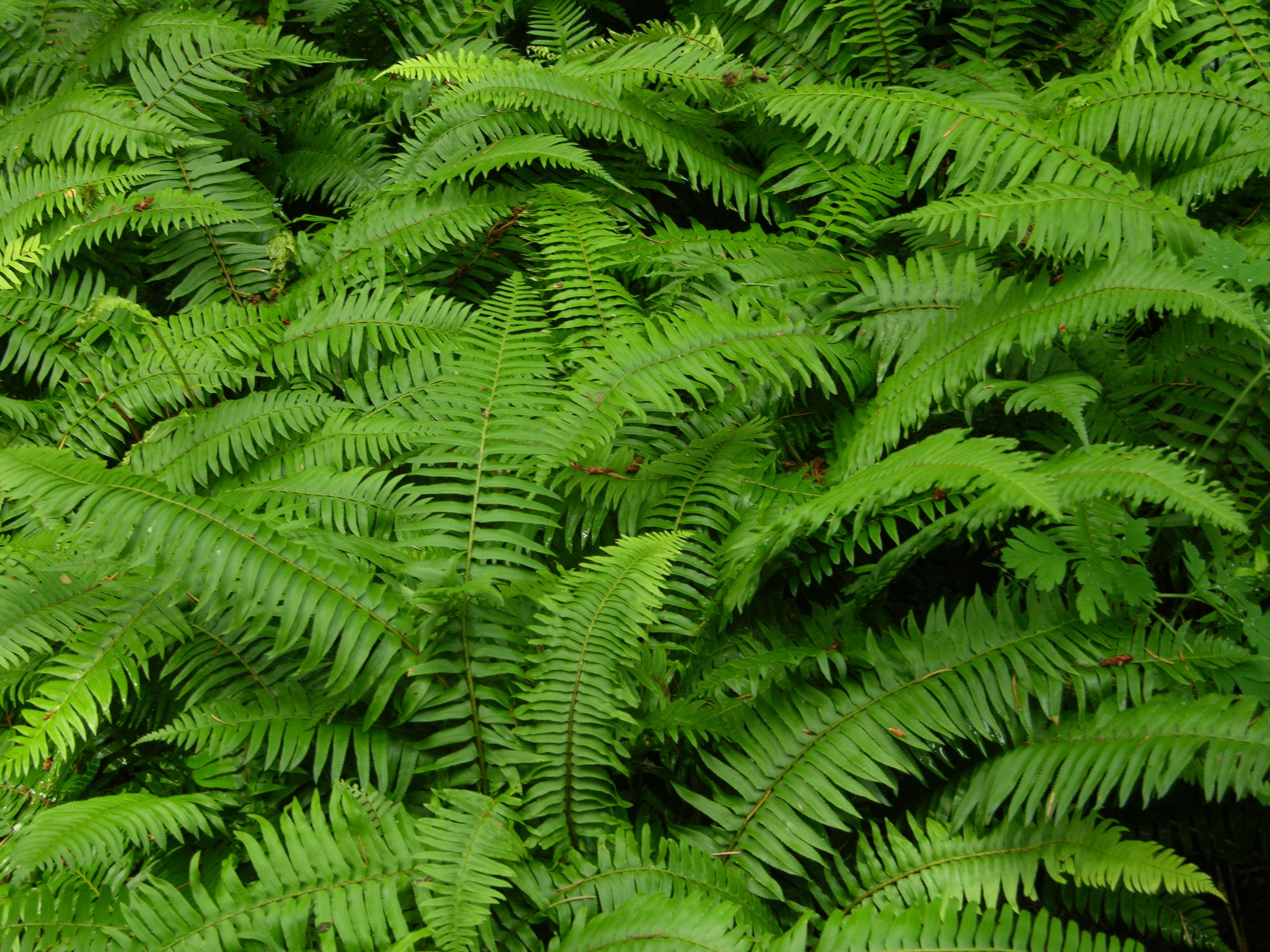 The Wild Garden: Hansenu0027s Northwest Native Plant Database