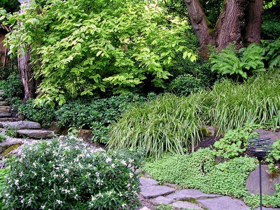 The Wild Garden Hansen 39 S Northwest Native Plant Database