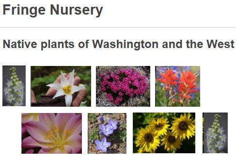 Plants Only Or And Seeds Natives Of Washington The Pacific Northwest West Seed Mountains Prairies Shrub Steppe